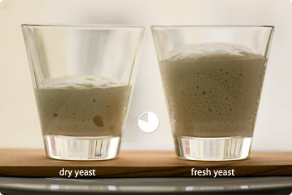 comparing yeast - after 50 minutes